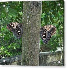 Photography Of Butterfly Symmetry Acrylic Print by Mario  Perez
