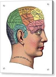 Phrenological Chart Acrylic Print by American School