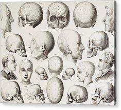 Phrenological Illustration Acrylic Print by English School