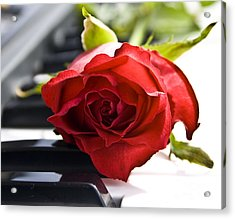 Piano Rose Acrylic Print by Sophie De Roumanie