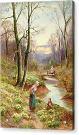 Picking Primroses  Acrylic Print by Ernest Walbourn