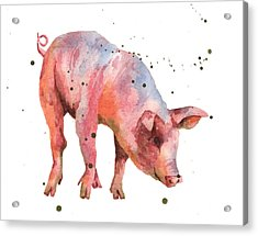 Pig Painting Acrylic Print by Alison Fennell