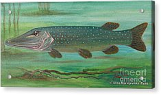 Pike Acrylic Print by Anna Folkartanna Maciejewska-Dyba