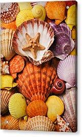 Pile Of Seashells Acrylic Print by Garry Gay