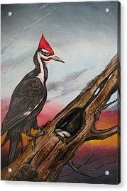 Pileated Woodpecker Acrylic Print by Martin Katon