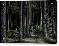 Pine Tree Forest At Night Acrylic Print by Dirk Ercken