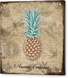 Pineapple, Ananas Comosus Vintage Botanicals Collection Acrylic Print by Tina Lavoie