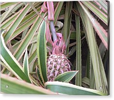 Pineapple Acrylic Print by Be Aimless