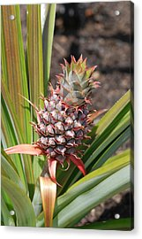 Pineapple Acrylic Print by Don  Wright