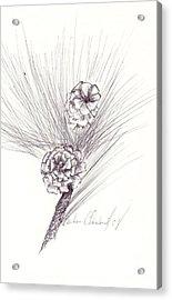 Pinecones Acrylic Print by Barbara Cleveland