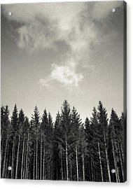 Pines And Clouds Acrylic Print by Dave Bowman