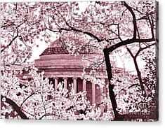 Pink Cherry Trees At The Jefferson Memorial Acrylic Print by Olivier Le Queinec