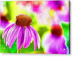Pink Coneflower Acrylic Print by Lanjee Chee