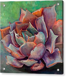 Pink Echeveria Acrylic Print by Athena  Mantle
