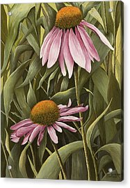 Pink Echinaceas Acrylic Print by Mary Ann King