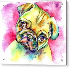 Pink Pug Acrylic Print by Christy  Freeman