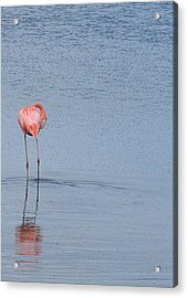 Pink Reflections Acrylic Print by Arry Murphey