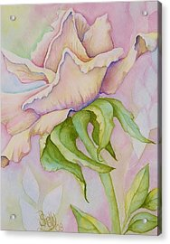 Pink Rose Acrylic Print by Shelly Ziska
