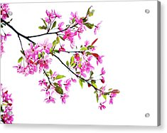 Pink Spring Acrylic Print by Marilyn Hunt