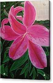 Pink Stargazer Lily Acrylic Print by Diann Blevins
