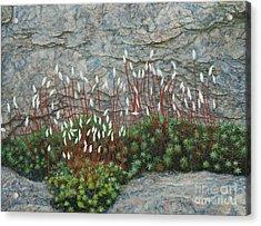 Pink Stony Creek Granite Still Life Study Acrylic Print by Cindy Lee Longhini