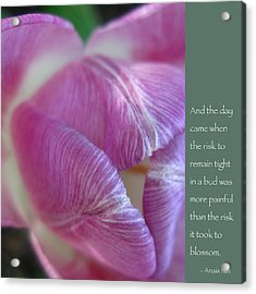 Pink Tulip With Anais Nin Quote Acrylic Print by Heidi Hermes