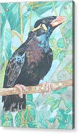 Pio  Xvi Acrylic Print by Arte Ivanna