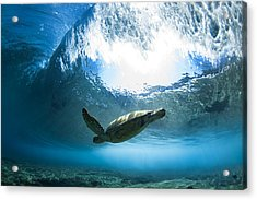 Pipe Turtle Glide Acrylic Print by Sean Davey