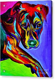 Pit Bull - Gaze Acrylic Print by Alicia VanNoy Call