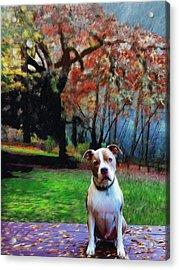Pit Bull Dog Portrait Acrylic Print by Enzie Shahmiri