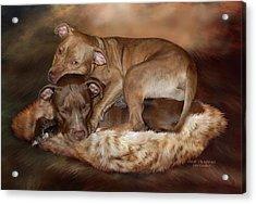 Pitbulls - The Softer Side Acrylic Print by Carol Cavalaris