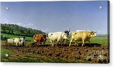 Ploughing In Nivernais Acrylic Print by Rosa Bonheur