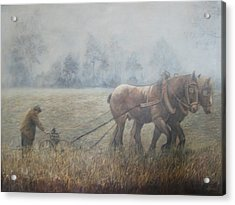 Plowing It The Old Way Acrylic Print by Donna Tucker
