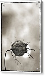 Love In A Mist Acrylic Print by Robert Brown