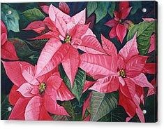 Poinsettia Trio Acrylic Print by Tina  Sander