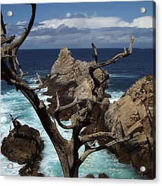 Point Lobos Rocks And Branches Acrylic Print by Charlene Mitchell