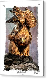 Poised Acrylic Print by John Williams