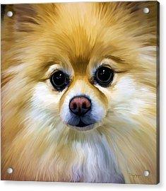 Pomeranian Acrylic Print by Thanh Thuy Nguyen