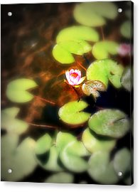 Pond Flower Acrylic Print by Perry Webster