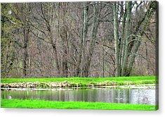 Pond Starts To Grow Acrylic Print by Debra     Vatalaro