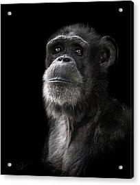 Ponder Acrylic Print by Paul Neville