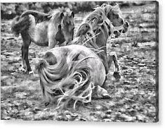 Ponies Acrylic Print by Contemporary  Art