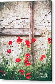 Poppies Against Wall Acrylic Print by Silvia Ganora