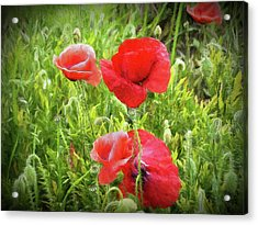 Poppies In Paris Acrylic Print by Louloua Asgaraly