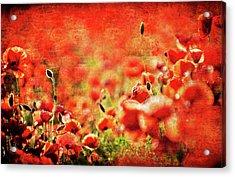 Poppies Acrylic Print by Meirion Matthias