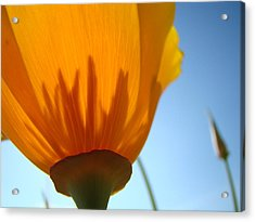 Poppies Sunlit Poppy Flower 1 Wildflower Art Prints Acrylic Print by Baslee Troutman