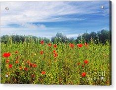 Poppy Dream Acrylic Print by SK Pfphotography