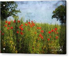 Poppy Field 1 Acrylic Print by SK Pfphotography