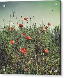 Poppy Field 2 Acrylic Print by SK Pfphotography