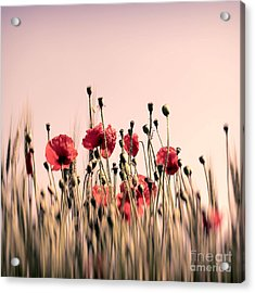 Poppy Field Abstract Acrylic Print by SK Pfphotography